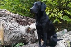 Fritz(Kalle)4