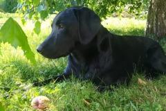 Fritz(Kalle)6