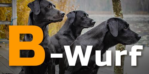 B-Wurf / Hintergrund: Pixabay