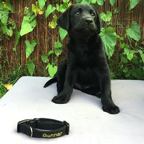 Happy Black Gunnar